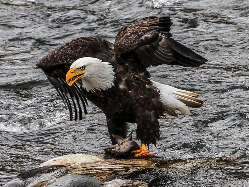 idaho eagle watching jet boat tour