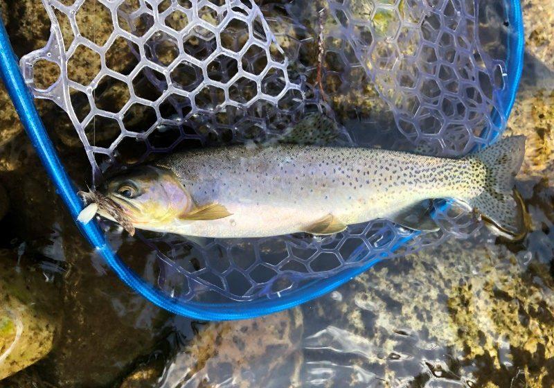 idaho-cutthroat-fly-fishing
